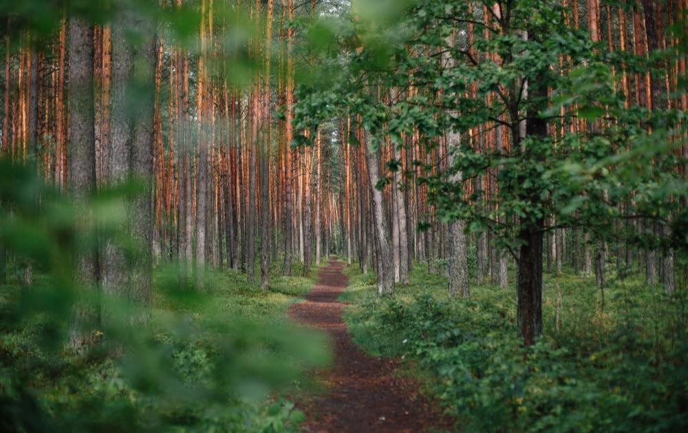 Self-mastery Integration - path